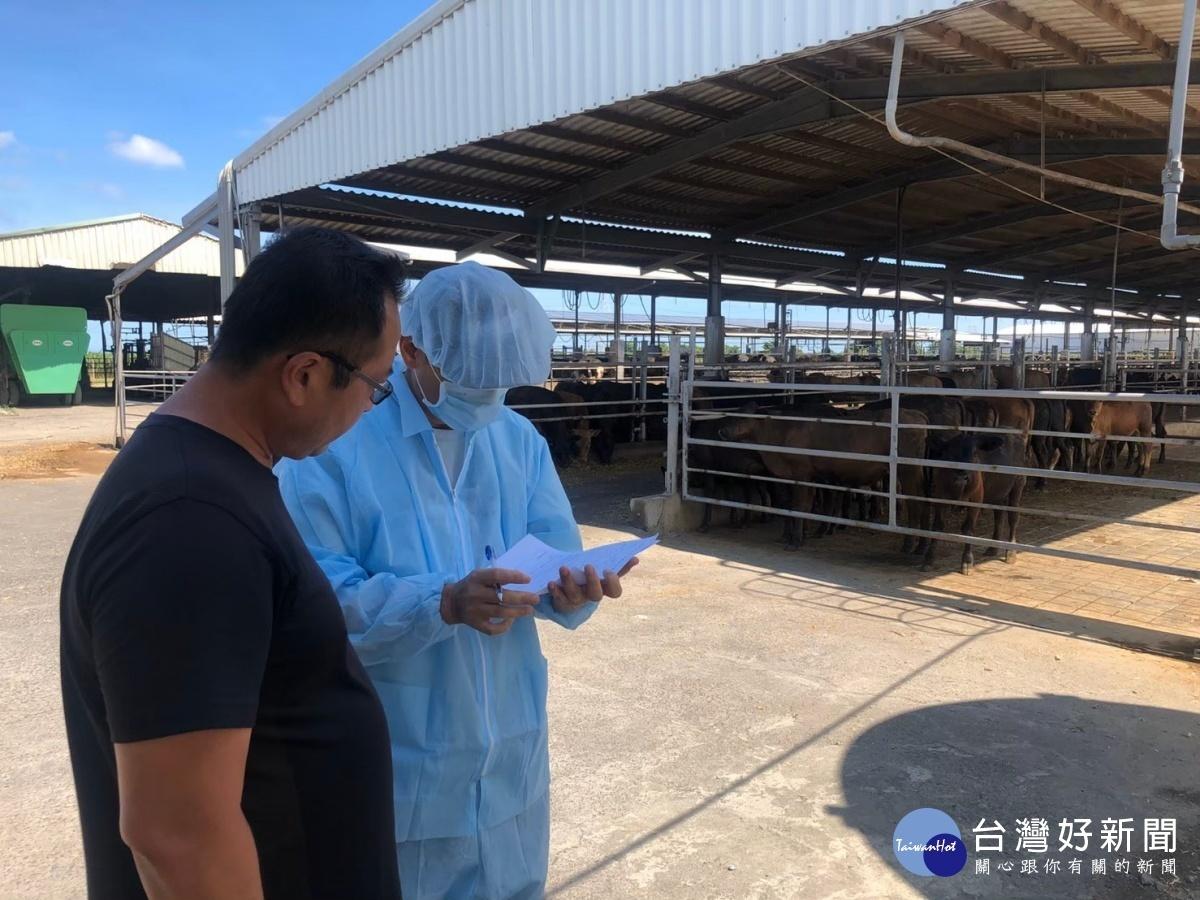 嘉義縣完成牛場疫調 牛隻健康狀況正常